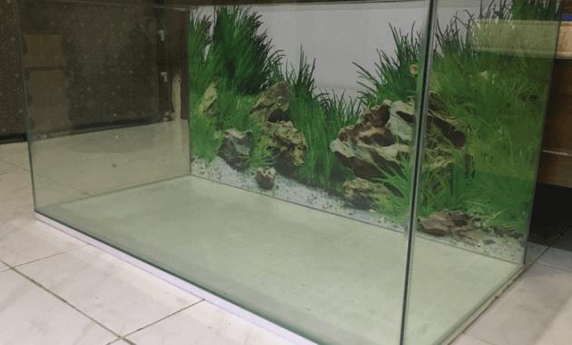 aquarium untuk ikan hias
