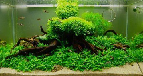 desain aquascape sederhana
