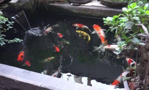 kolam ikan koi pakai semen