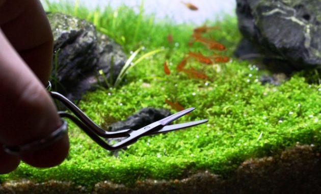 alat untuk membuat aquascape