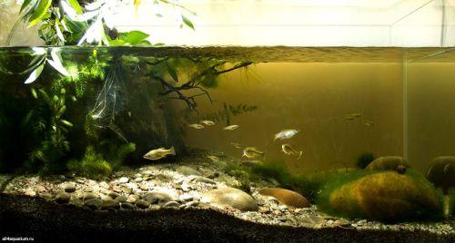 contoh biotope sungai
