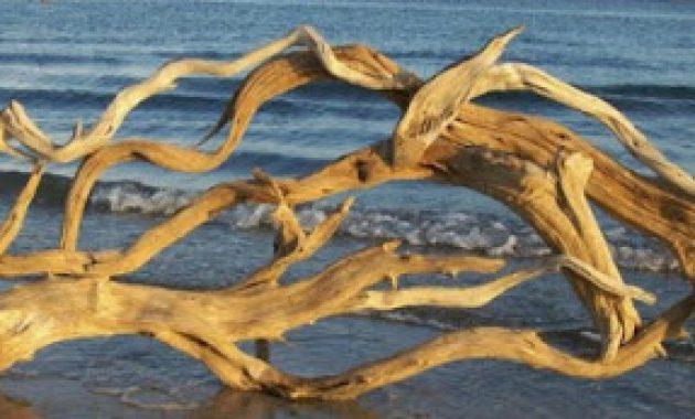 kayu bakau yang banyak di pantai