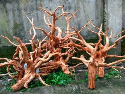 bentuk kayu rasamalu cocok untuk aquascape