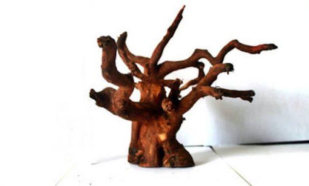 kayu untuk bonsai