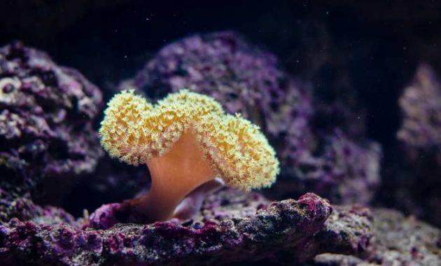 karang untuk bersembunyi