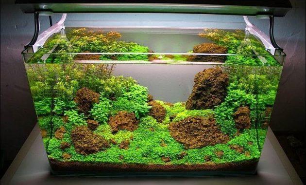 tema hutan di akuarium