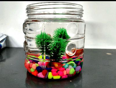 memelihara ikan dalam toples