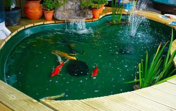 kolam ikan koi dengan warna hijau