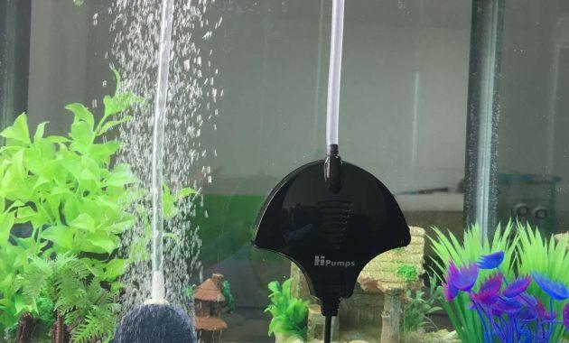 fungsi gelembung di akuarium