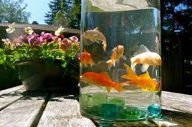 ikan di toples