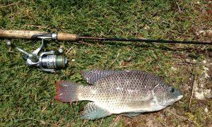 cara mancing ikan nila