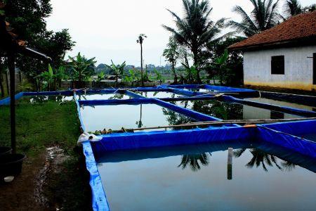 kolam ikan nila dari terpal