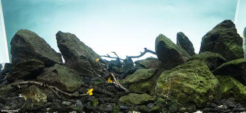 Contoh Biotope Dasar Danau Matano, Sulawesi Selatan