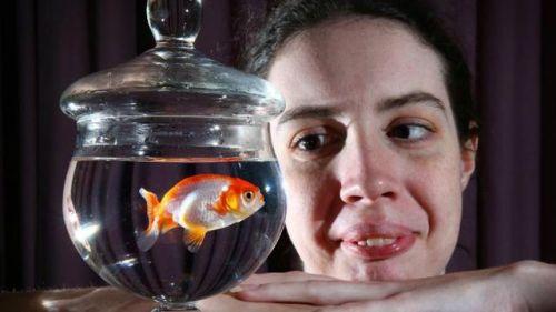 ikan koi untuk terapi penyakit